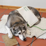 Bioresonanz bei Allergien Hund